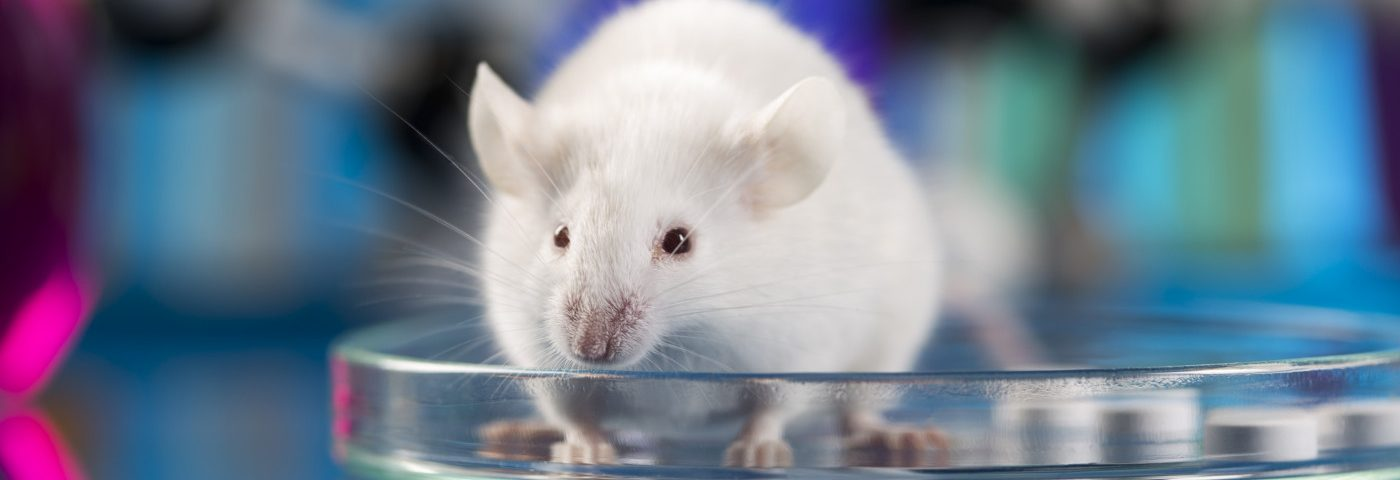 Liver-targeting Gene Therapy Reduces Extra Phenylalanine in PKU Mice